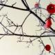 В Ставрополе ко дню влюбленных появится дерево желаний