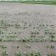 Из за стихии аграрии на Ставрополье потеряли 20 миллиардов рублей