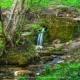 Быть ли лесопарком Таманскому лесу...