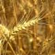 Изобретение ученых повысит урожай в Ставропольском крае.