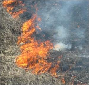 В Ипатовском районе неизвестные подожгли поле