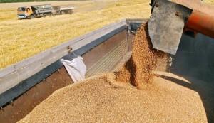 На ставрополье собран первый миллион тон зерна