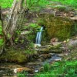 Быть ли лесопарком Таманскому лесу…
