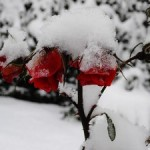 Зима в Ставрополе не наступит внезапно